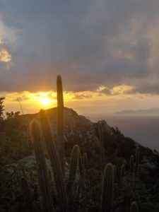 St Barth cactus Atlantique