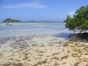 St Barth mangrove