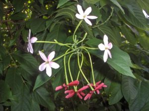 St Barth fleurs