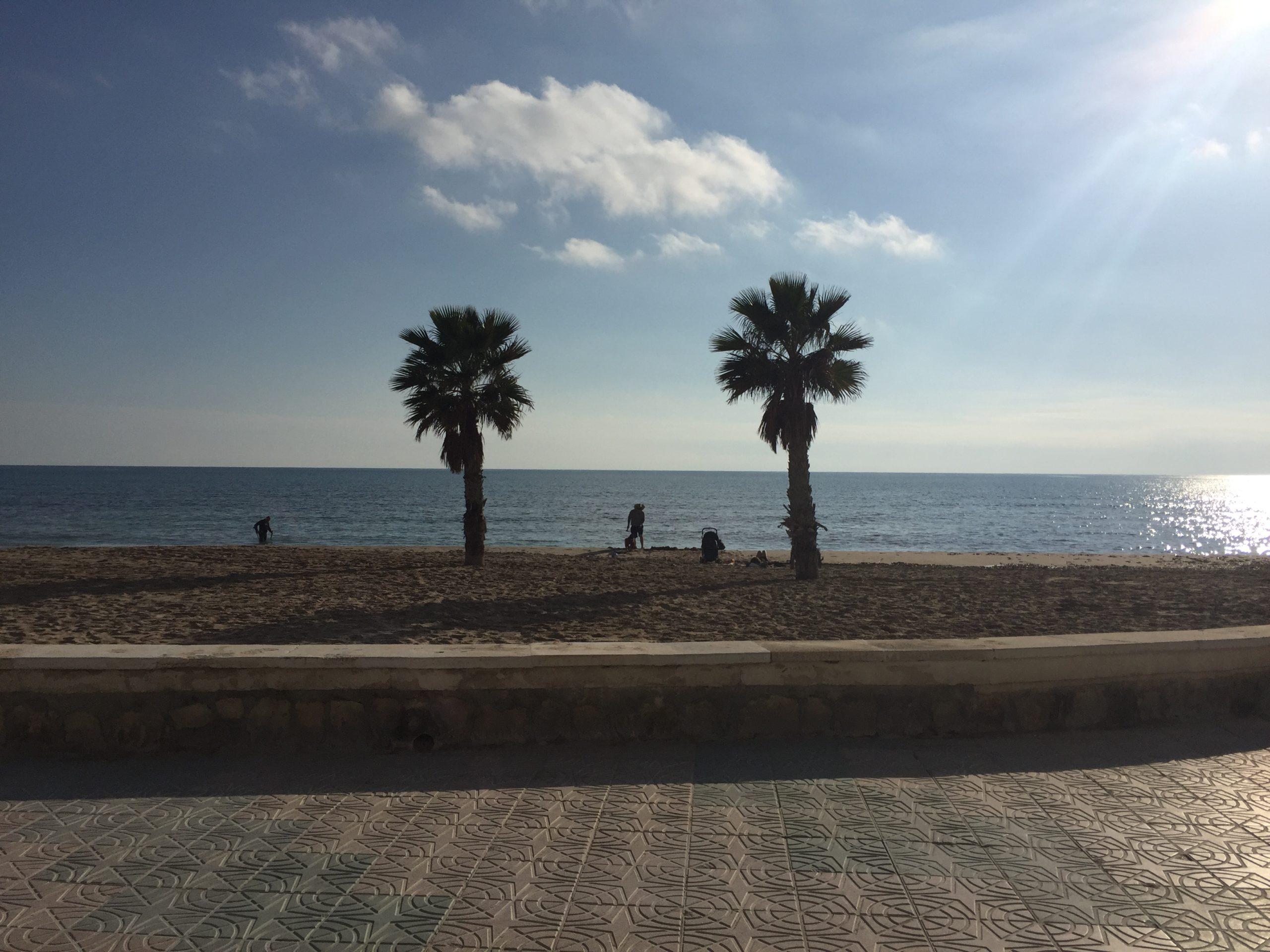 palmiers plage Espagne sud