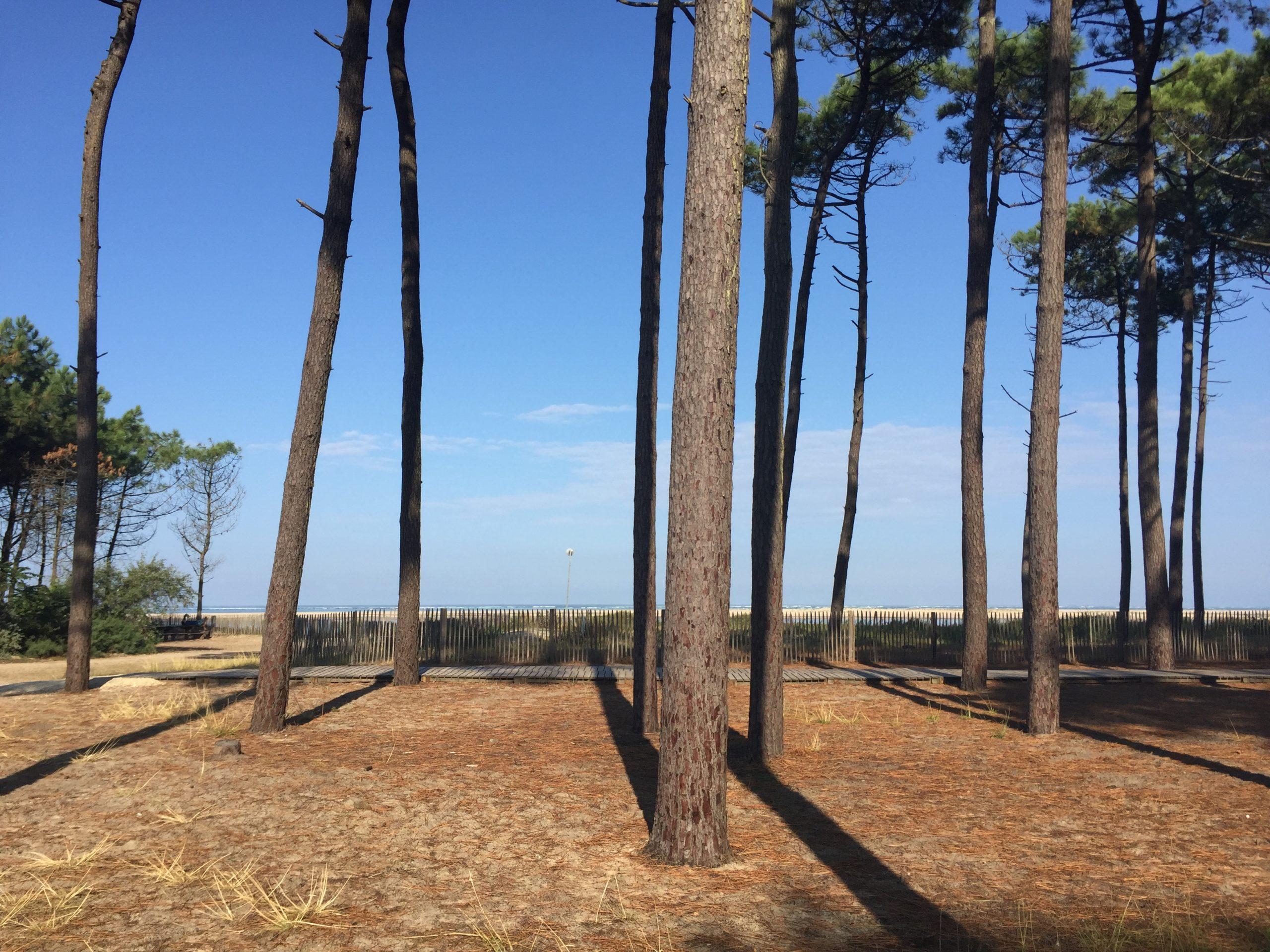 la plage et les pins